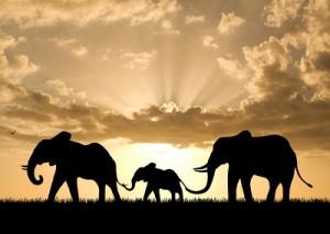 feature_elephants
